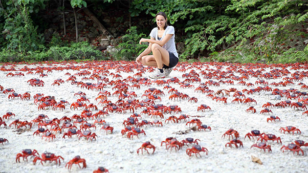 red-crab-migration-7